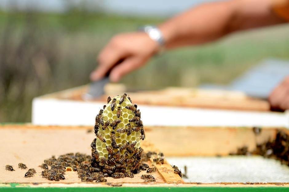 Med i proizvodi od meda - šta je pravi med a šta prevara